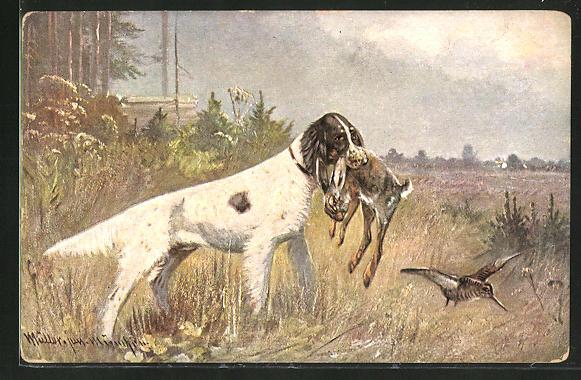 Künstler-AK M. Müller jun.: Jagdhund mit erlegten Hasen im Maul
