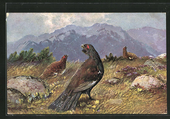 Künstler-AK M. Müller jun.: Auerhahn mit seinen Hennen