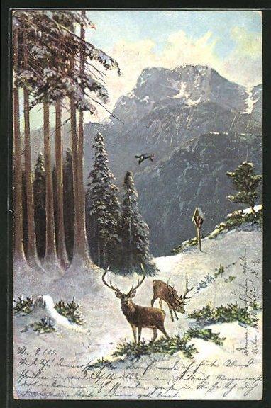Künstler-AK M. Müller jun.: Hirsche bei der Futtersuche im Schnee