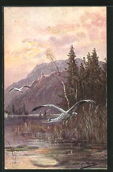 Künstler-AK M. Müller jun.: über einen See fliegende Vögel