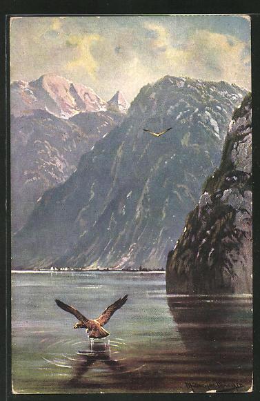 Künstler-AK M. Müller jun.: Raubvogel beim Fischen im See 0
