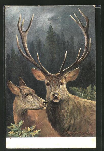 Künstler-AK M. Müller jun.: Hirsch mit seiner Hirschkuh