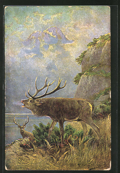 Künstler-AK M. Müller jun.: ein röhrender Hirsch am See