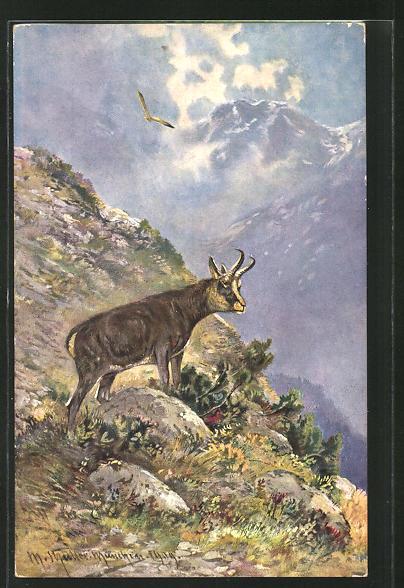 Künstler-AK M. Müller jun.: eine Gemse am Berg