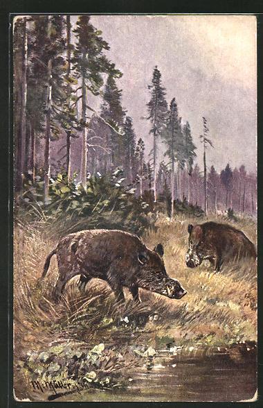Künstler-AK M. Müller jun.: Wildschweine im Wald 0