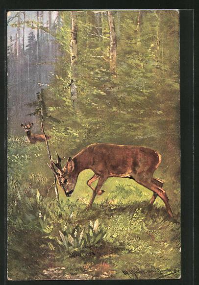 Künstler-AK M. Müller jun.: Rehe im Wald