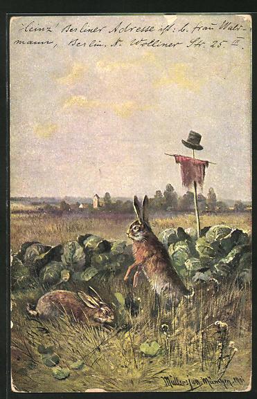 Künstler-AK M. Müller jun.: Hasen fressen am Kohl 0