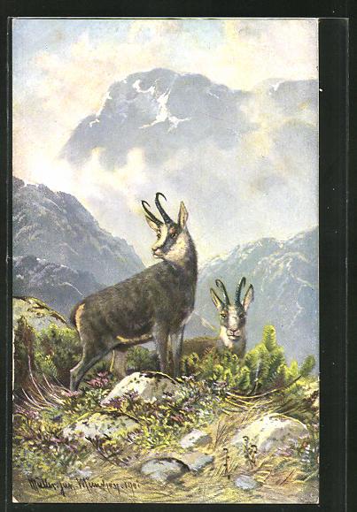 Künstler-AK M. Müller jun.: Gemsen im Gebirge