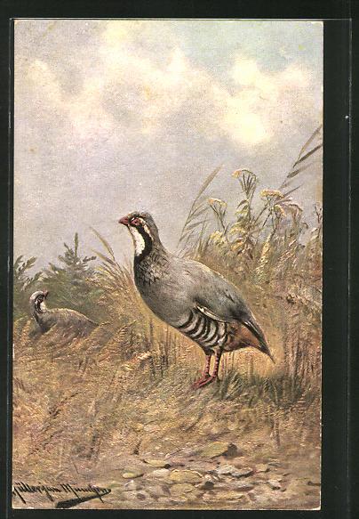 Künstler-AK M. Müller jun.: Vögel im Gras 0