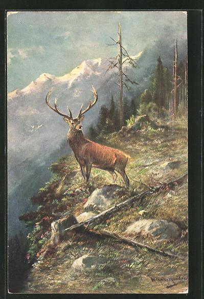 Künstler-AK M. Müller jun.: ein Hirsch auf einem Berg