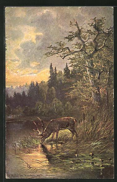 Künstler-AK M. Müller jun.: ein Hirsch trinkt im See