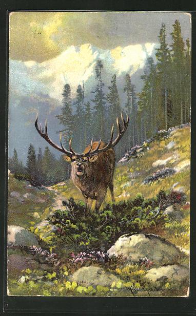 Künstler-AK M. Müller jun.: ein röhrender Hirsch an einem Berghang