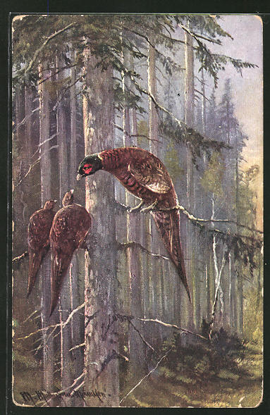 Künstler-AK M. Müller jun.: Fasanen mit Hennen auf einem Baum