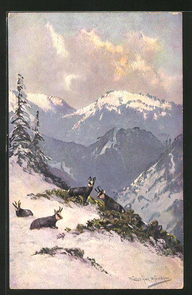 Künstler-AK M. Müller jun.: Gemsen im winterlichen Gebirge 0