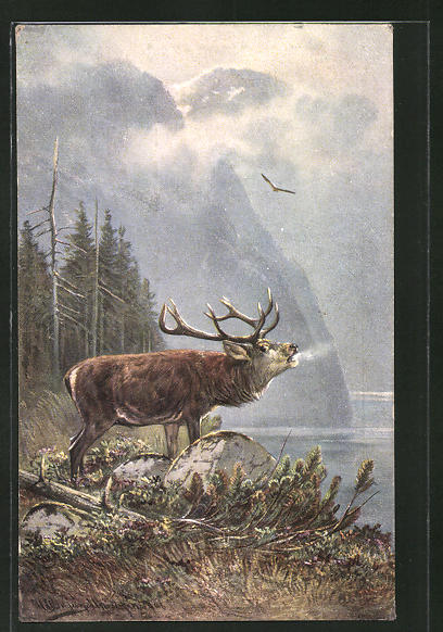 Künstler-AK M. Müller jun.: röhrender Hirsch an einem See