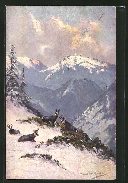 Künstler-AK M. Müller jun.: Gemsen im winterlichen Gebirge