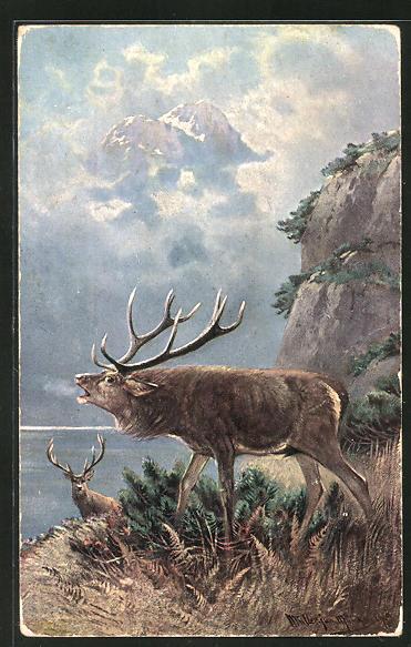 Künstler-AK M. Müller jun.: röhrender Hirsch auf einem Felsvorsprung am See