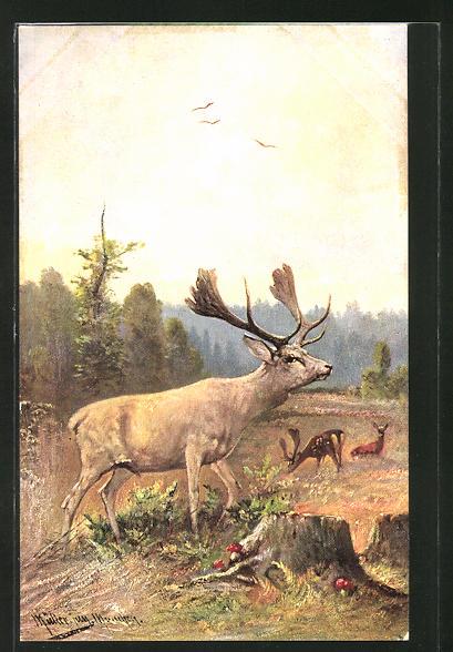 Künstler-AK M. Müller jun.: Hirsche auf einer Waldlichtung