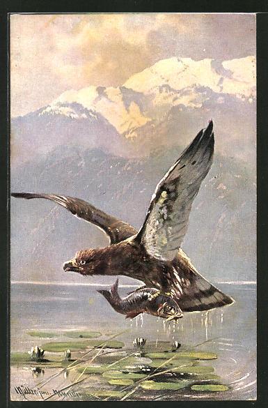 Künstler-AK M. Müller jun.: Raubvogel mit einem Fisch in den Krallen