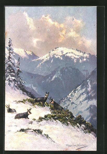 Künstler-AK M. Müller jun.: Gemsen auf den winterlichen Bergen