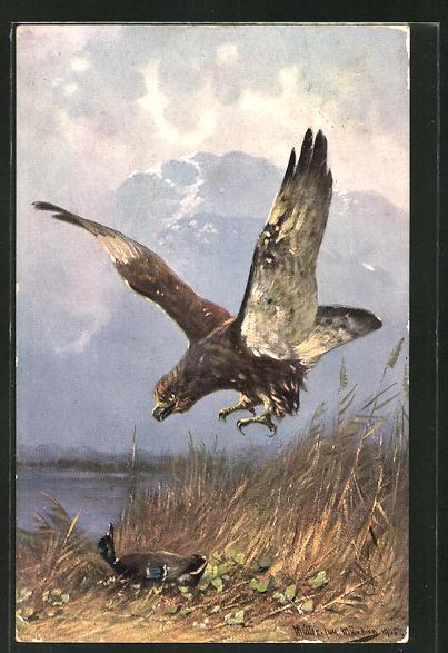 Künstler-AK M. Müller jun.: Raubvogel beim Anflug auf eine Ente