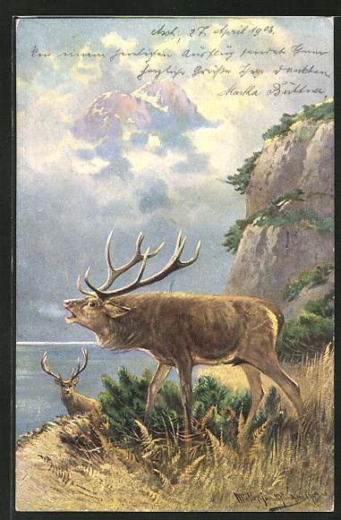 Künstler-AK M. Müller jun.: röhrender Hirsch auf einem Berg am See