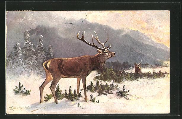 Künstler-AK M. Müller jun.: Hirsch im Winter