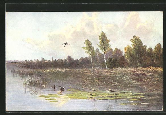 Künstler-AK M. Müller jun.: Wildenten auf einem See
