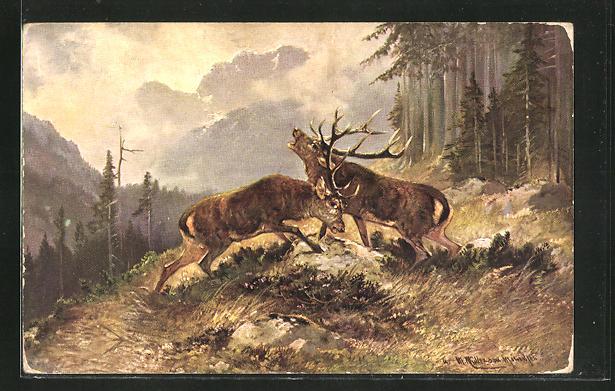 Künstler-AK M. Müller jun.: kämpfende Hirsche