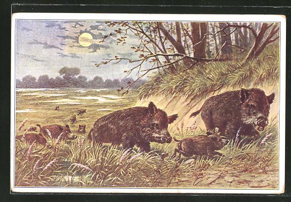 Künstler-AK Fr. Rösler: Wildschweinwanderung in der Abendsonne