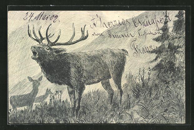 AK Röhrender Hirsch am Waldesrand