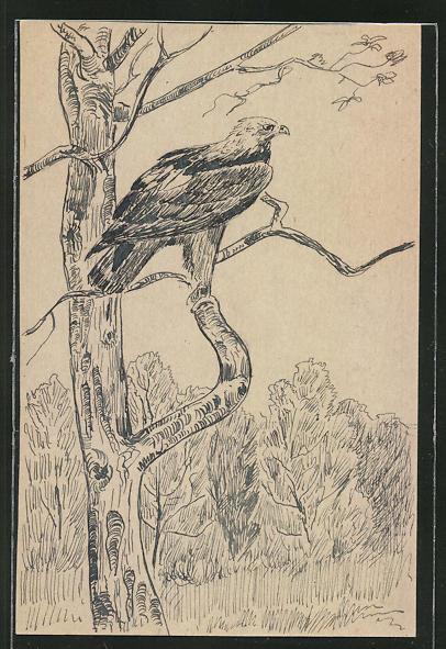 Künstler-AK Handgemalt: Adler hält Ausschau nach Beute