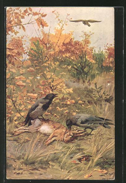 Künstler-AK sign. V. Trsek: Raben fressen vom toten Hasen
