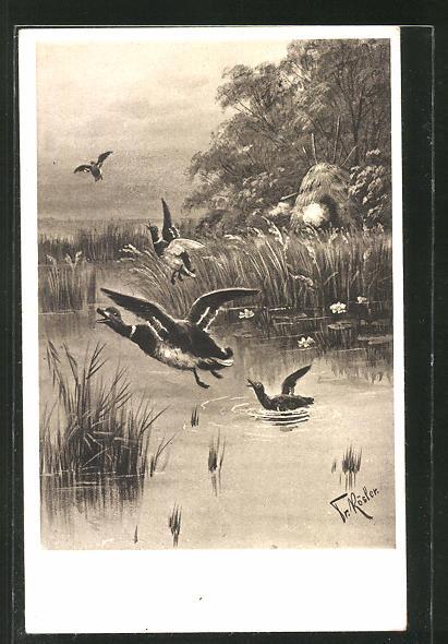 Künstler-AK Fr. Rösler: fliehende Enten am Teich