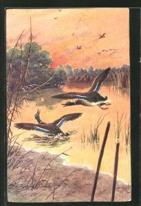 Künstler-AK Fr. Rösler: schnatternde Enten am Teichufer