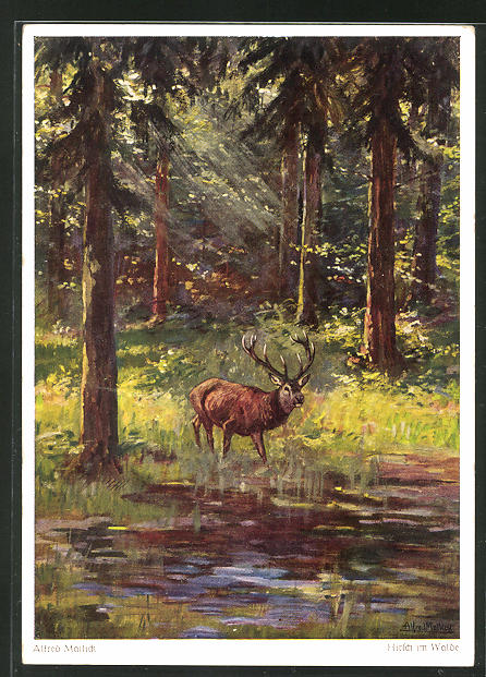 Künstler-AK Alfred Mailick: Hirsch im Walde
