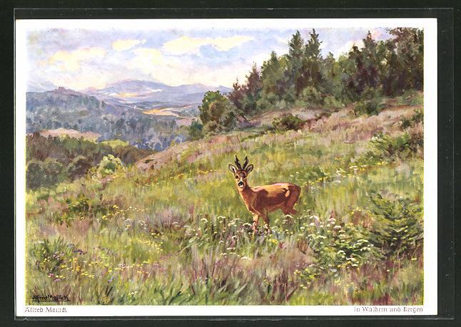 Künstler-AK Walter Einbeck: In Wäldern und Bergen, Idyll mit Rehbock