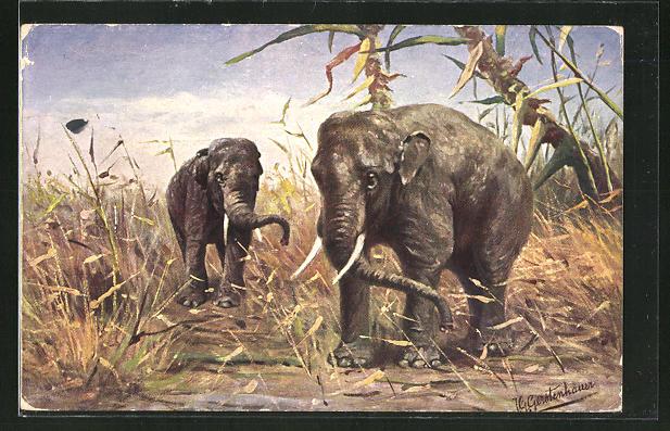 Künstler-AK Johan Georg Gerstenhauer: Asiatischer Elefanten im hohen Gras