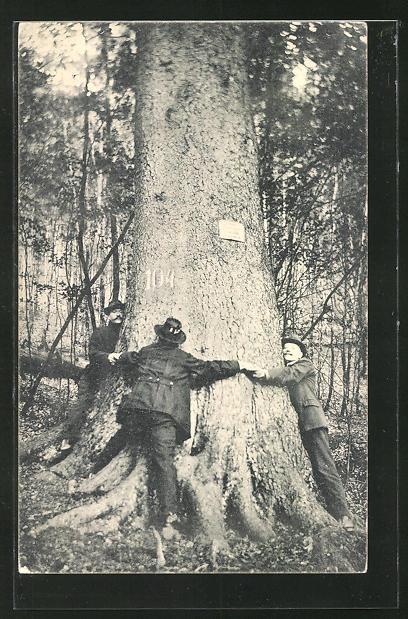 AK Hohegeiss im Oberharz, Die dicken Tannen bei der Wolfsbachmühle
