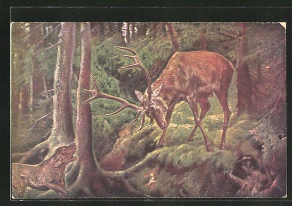 AK Jagdhund bellt einen drohenden Hirsch an