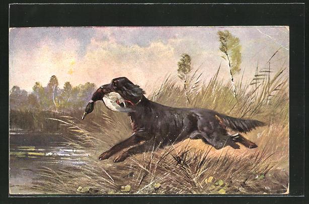 AK Jagdhund mit erschossener Ente im Maul