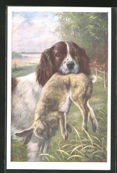 AK Jagdhund mit erlegten Hasen im Maul
