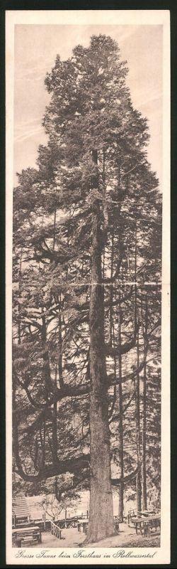 Klapp-AK Grosse Tanne beim Forsthaus im Rollwassertal