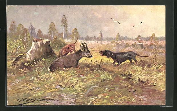 Künstler-AK M. Müller jun.: Dackel bellen einen im Gras liegenden Rehbock an