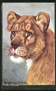 Künstler-AK Ermenegildo Carlo Donadini: Kopf einer Löwin