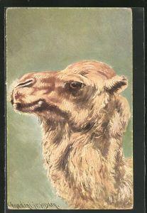Künstler-AK Ermenegildo Carlo Donadini: Kopf eines Dromedars, Kamel