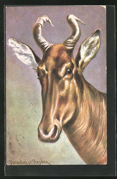Künstler-AK Ermenegildo Carlo Donadini: Kopf einer Antilope