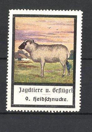 Reklamemarke Jagdtiere und Geflügel, Heidschnucke
