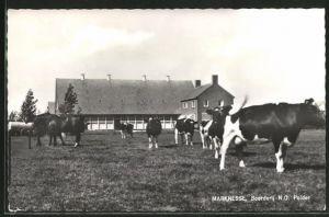 AK Marknesse, Boerderij, Bauernhof mit Kuhweide