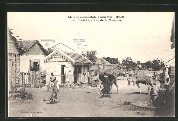 AK Dakar, Rue de la Mosquée, Strassenpartie mit Dromedaren
